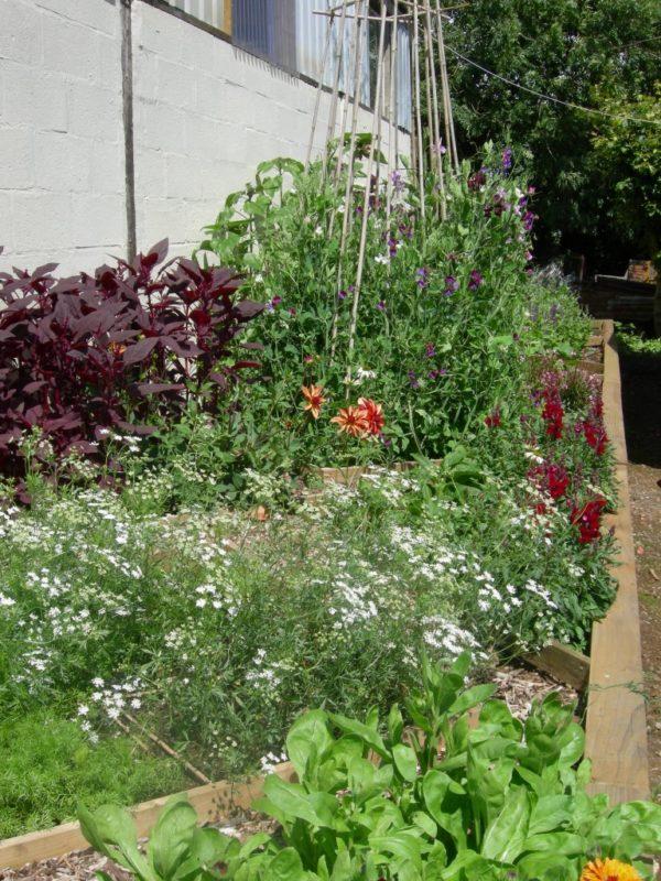A Cutting Garden-3136